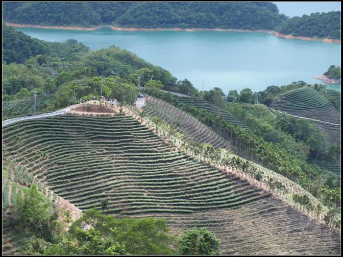 千岛湖,八卦茶园,永安步道